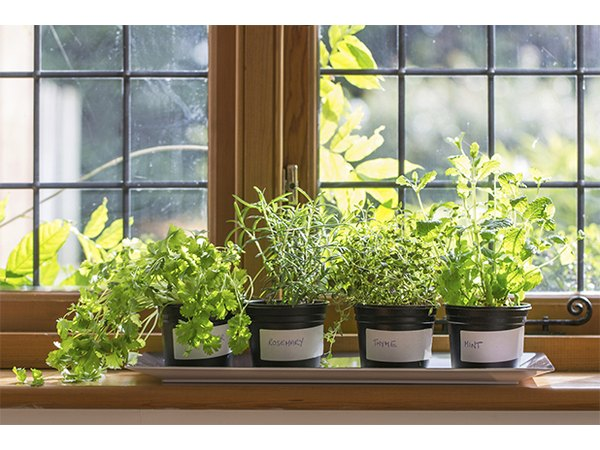 A windowsill herb garden is practical and decorative.