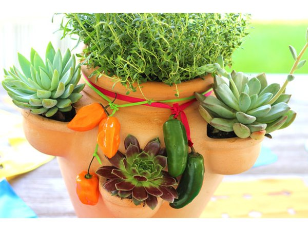 Caring for the herb and succulent garden