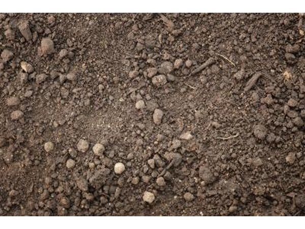 Soil Preparation Is Essential