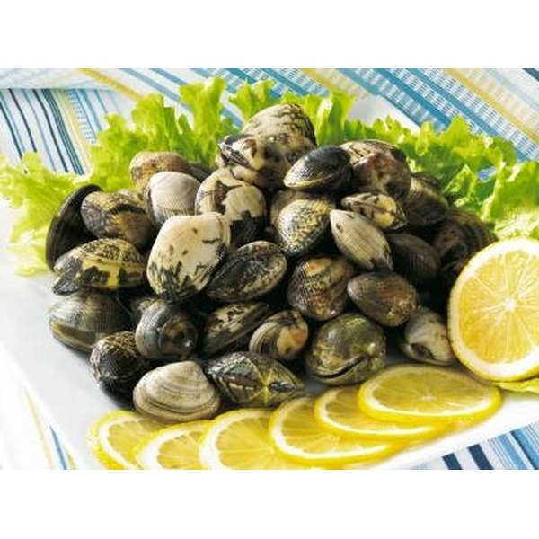 Clams come in a variey of sizes