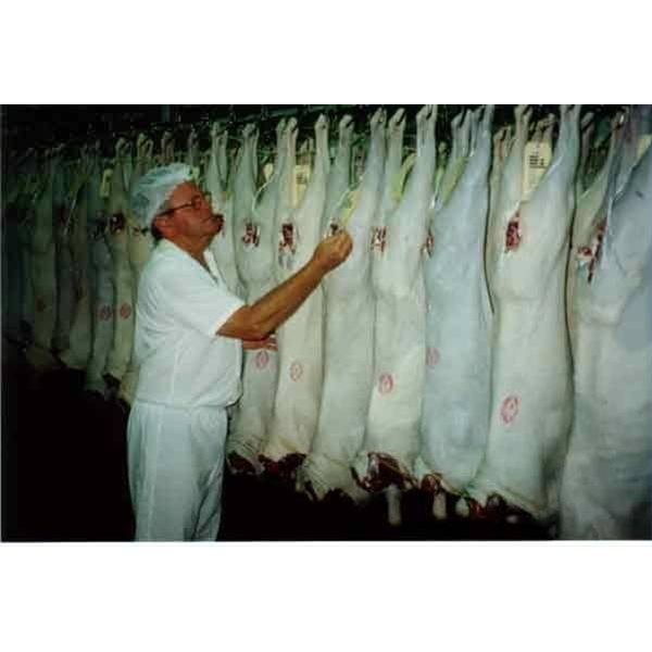 How Does an Abattoir Operate?