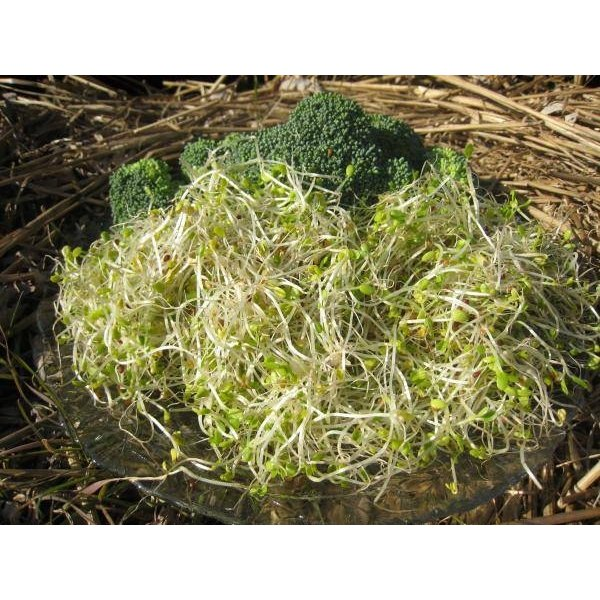 Broccoli Sprouts. Image courtesy of Science Daily.