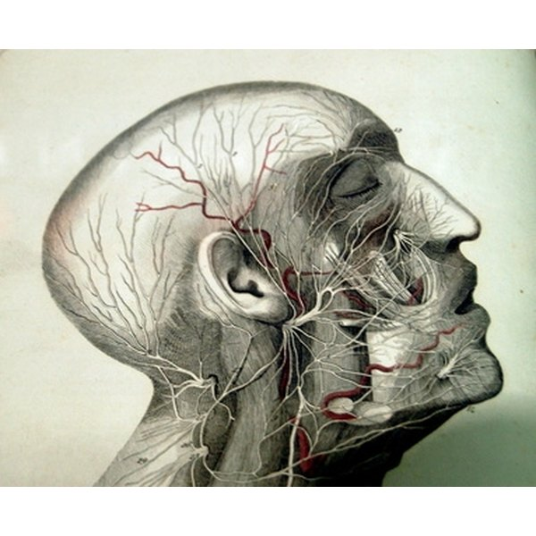 Degree Programs In Medical Illustration Synonym