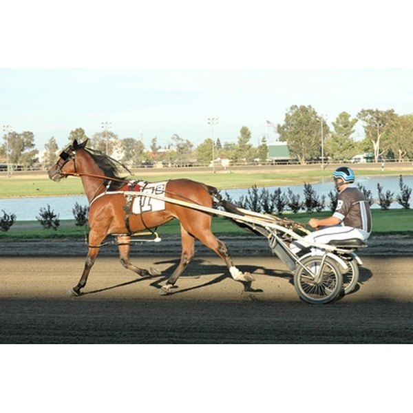 Horses pull carts and drivers in harness racing.