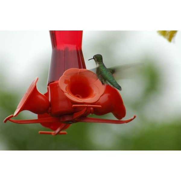 Attract tiny fliers with refreshed hummingbird food.