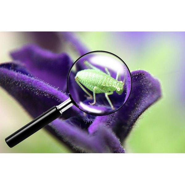 Fight garden pests with safe, salt-based insecticides.