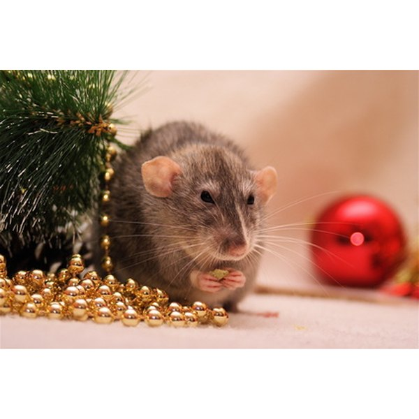 Rat poison can lead to long-term health probelms in pets and humans.