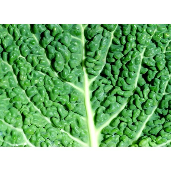 Collard greens are sturdy and mild in flavor.
