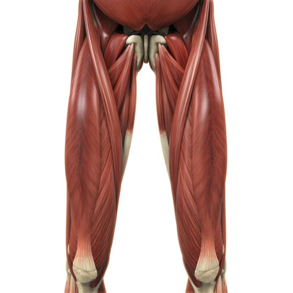 Your various adductor muscles run from the pubic bone down to your femur.