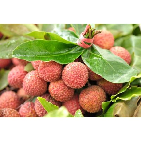 Lychee fruit are rich in vitamin C.