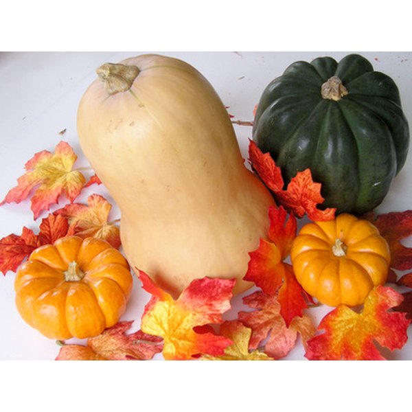 The butternut squash is related to the pumpkin.