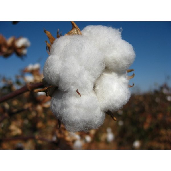 Cotton is a primary component of conventional attire.