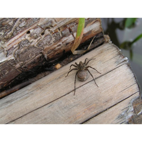 Most spiders are not toxic. Ontario has few poisonous spiders.
