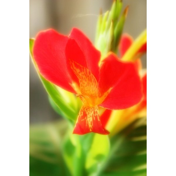 Hawaii is home to some of the most distinct flowers in the world.