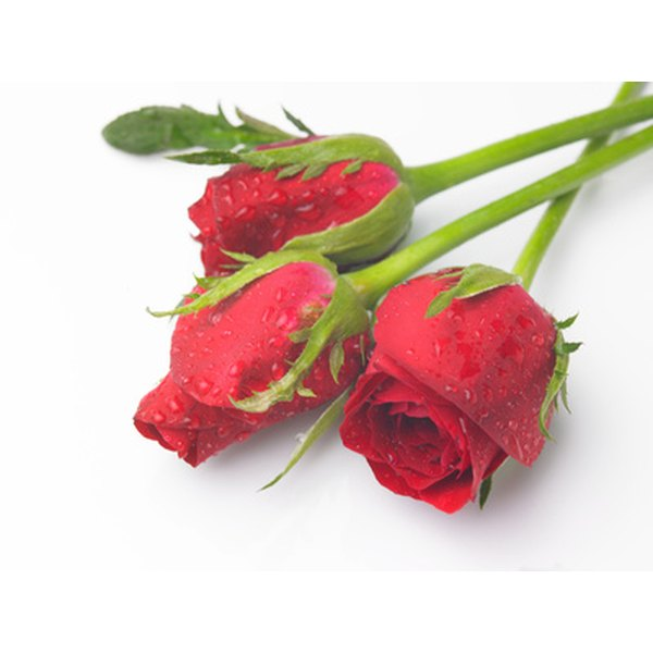 Sending roses in the mail yourself is easy and inexpensive!