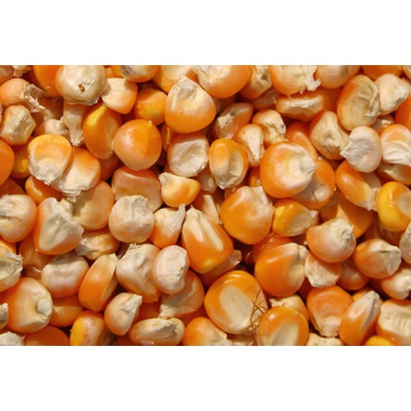 Corn seeds come in many varieties, each displaying unique characteristics.