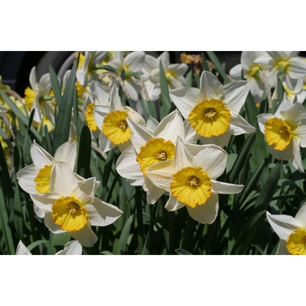 Make daffodil centerpieces representative of the guest of honor's new start in life.