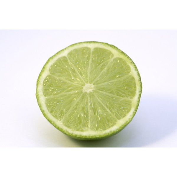 Can the bite of a lime disinfect a wound?