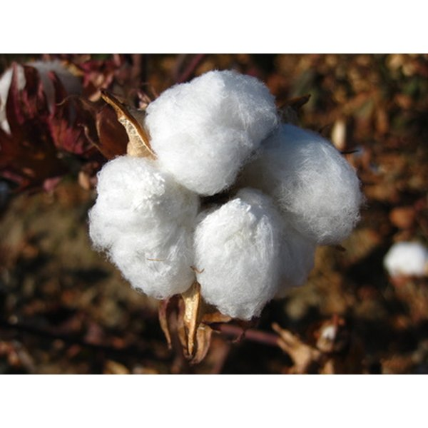Cotton has a variety of trade names which reflect its quality.