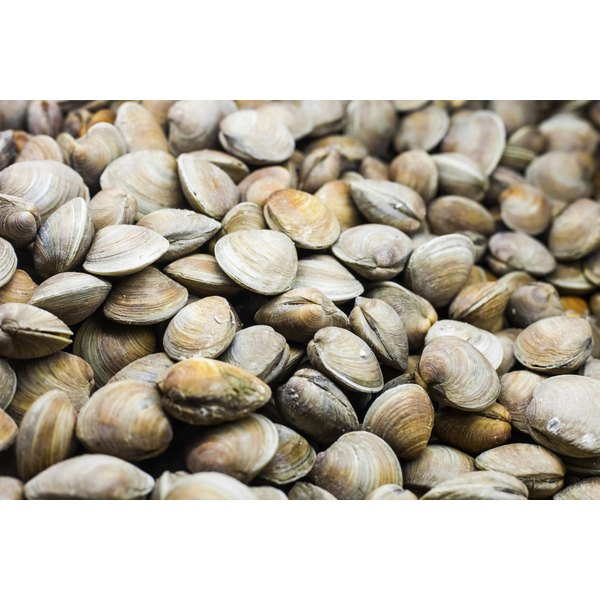 Clams for sale at a market.