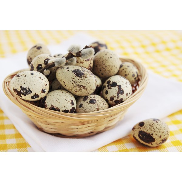 Quail eggs are approximately one-fourth the size of chicken eggs.