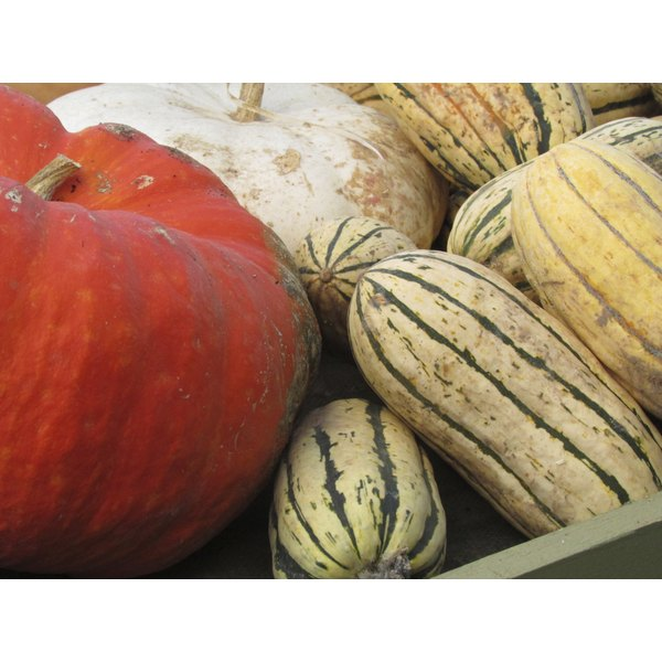 Delicata squash sitting next to a red and white pumpkin.
