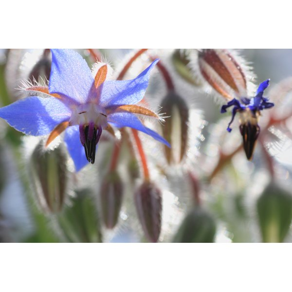 Other treatments for menopause symptoms may be more effective than starflower  oil.