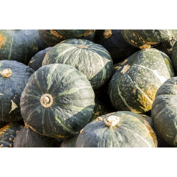 A bundle of Japanese Pumpkins.