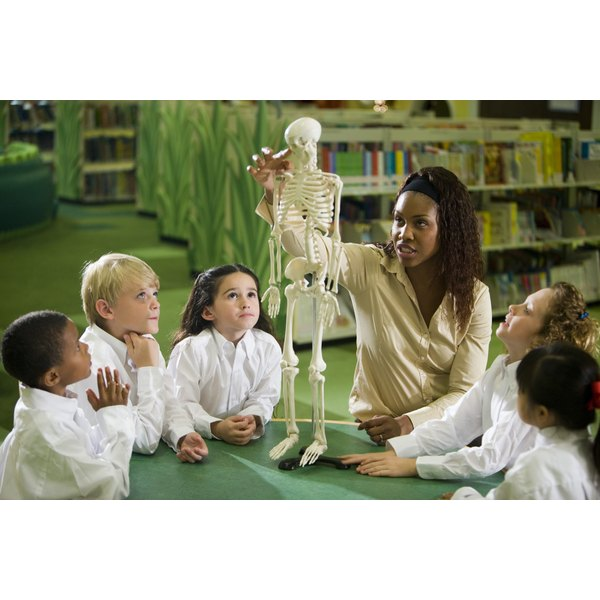 Children looking at a skeleton model with their teacher.