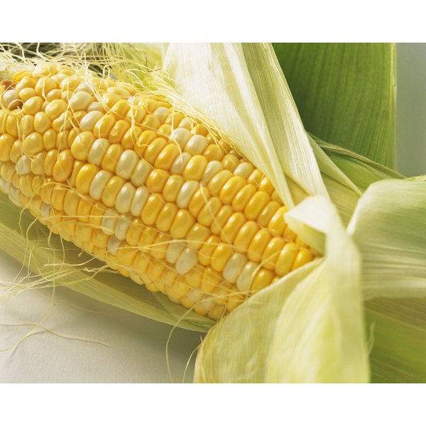 Close-up of GMO altered corn