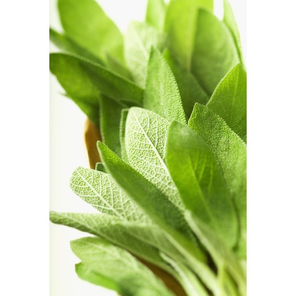 Sage increases circulation to the scalp.