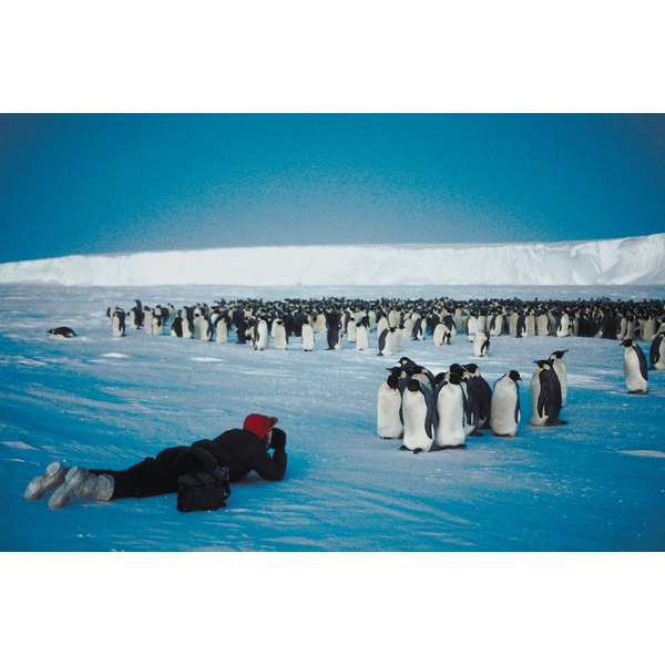 A scientist in Antarctica takes pictures of penguins.