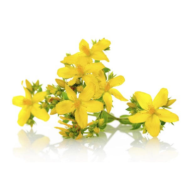 St. John's Wort has been used for treating neurological conditions dating back to ancient Greece.