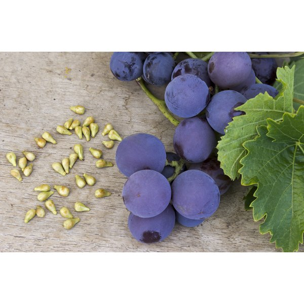 Purple grapes and grape seeds on a linen table cloth.