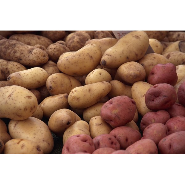 Long Russet potatoes should produce the longest fries.