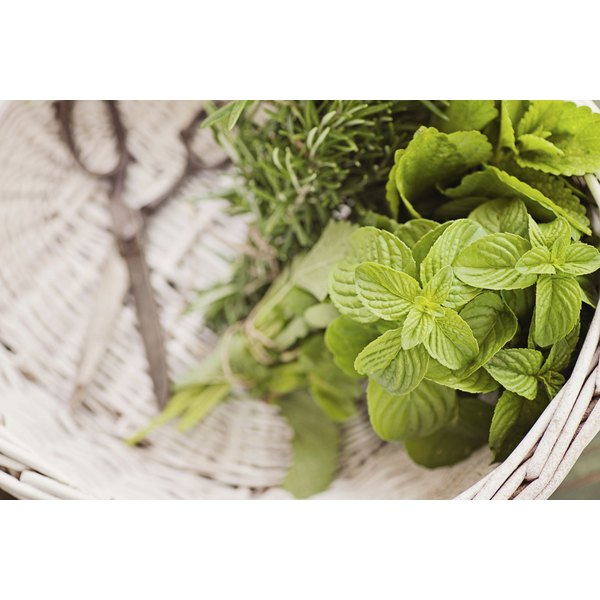 A close-of freshly snipped herbs in a basket.