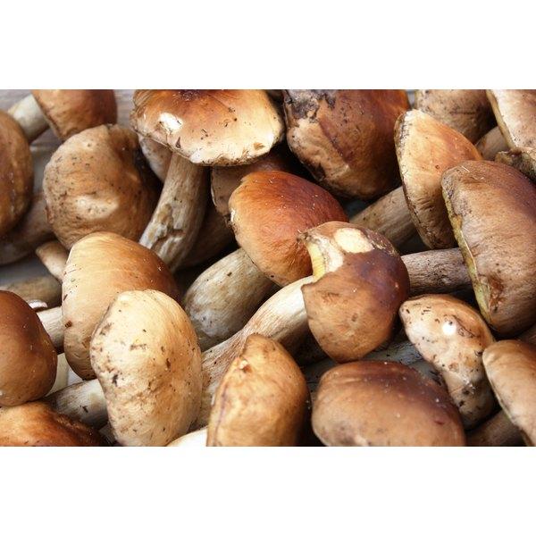 Porcini mushrooms for sale at a market.