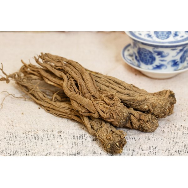 The root of dong quai is a traditional Chinese medicine.