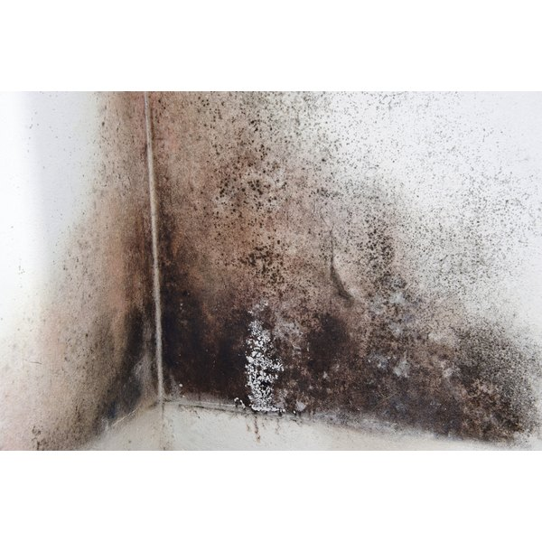 Individuals With Asthma May Encounter Problems Black Mold