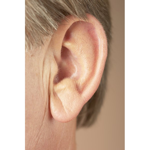 Stimulating acupuncture pressure points on the ear sends messages to the hypothalamus to suppress appetite.