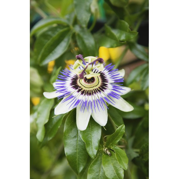 Passion flower and valerian can be taken as herbal tea before bed to improve sleep quality.