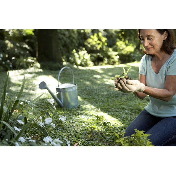A middle-aged woman works in her garden.