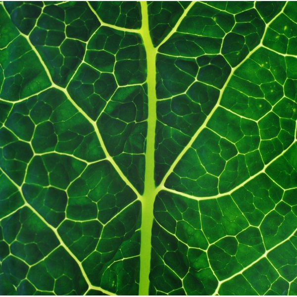 Vitamin K can be found in many dark, leafy greens.