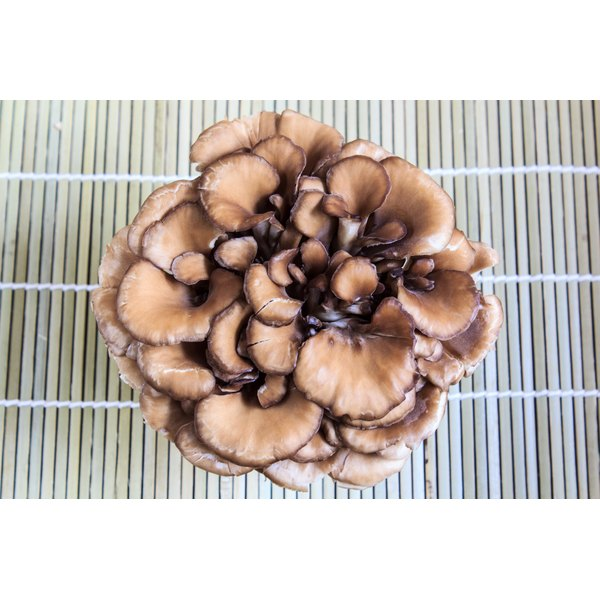 A bowl of maitake mushrooms.