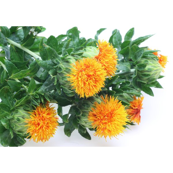 Safflowers on a white counter.