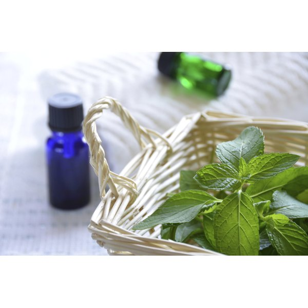 A small bottle of peppermint oil and a basket of mint leaves.