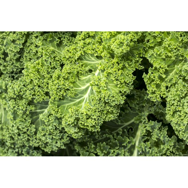 A close-up of fresh kale.