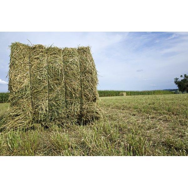 A bale of alfalfa hay.
