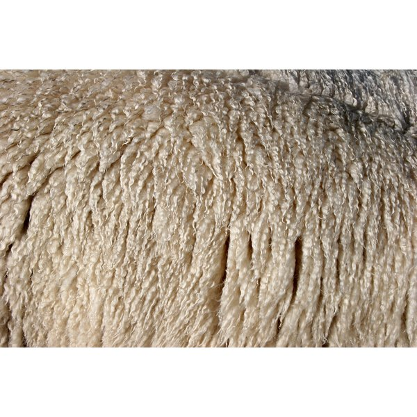 Close-up of sheep wool on sheep's side.