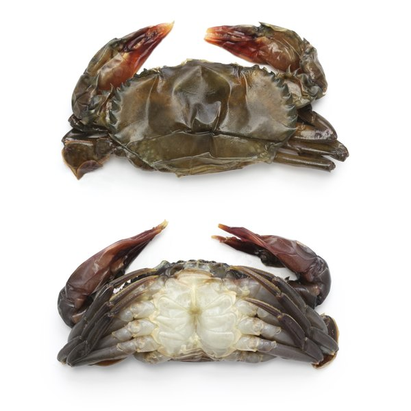 Raw soft shell crab.